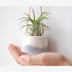 Small plant hanger for Tillandsia (air plant). Cream with smokey grey decor. Minimalist design